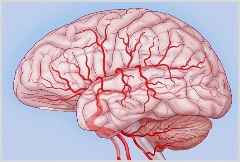 Препарат улучшает кровоснабжение мозга