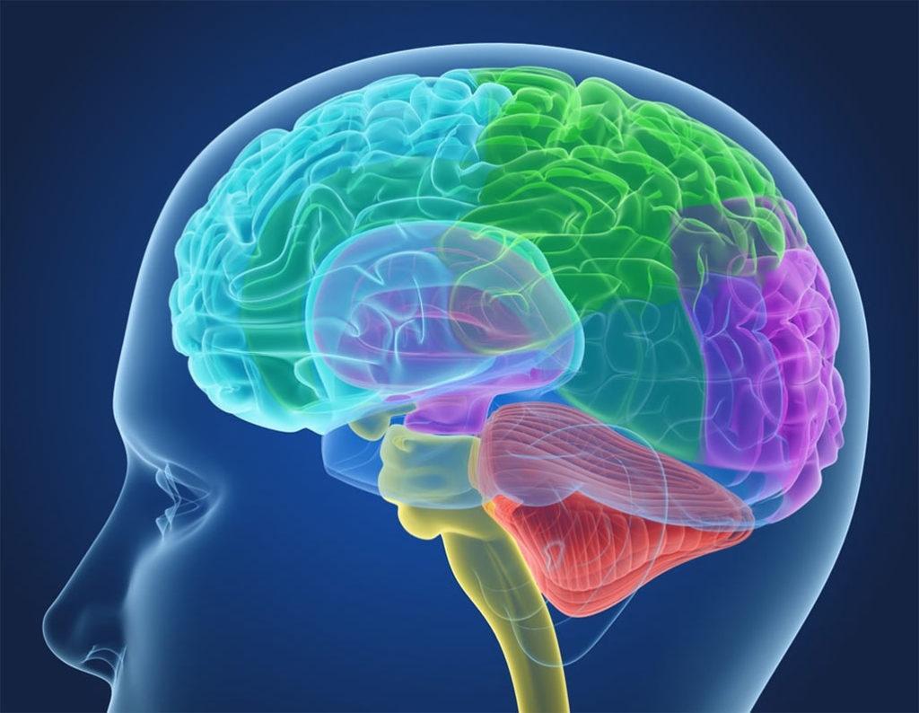 Нормализует функции нервной ткани