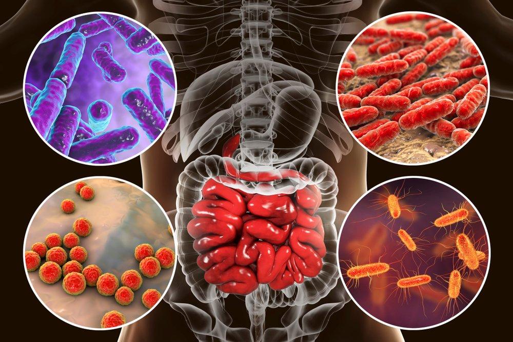 Действует на микробиом кишки