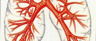 Бронхиальная астма: приступ, причины, диагностика, лечение, у детей