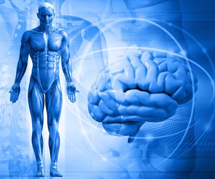 Улучшает когнитивную деятельность