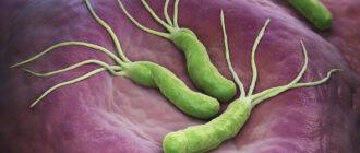 Внешний вид бактерий