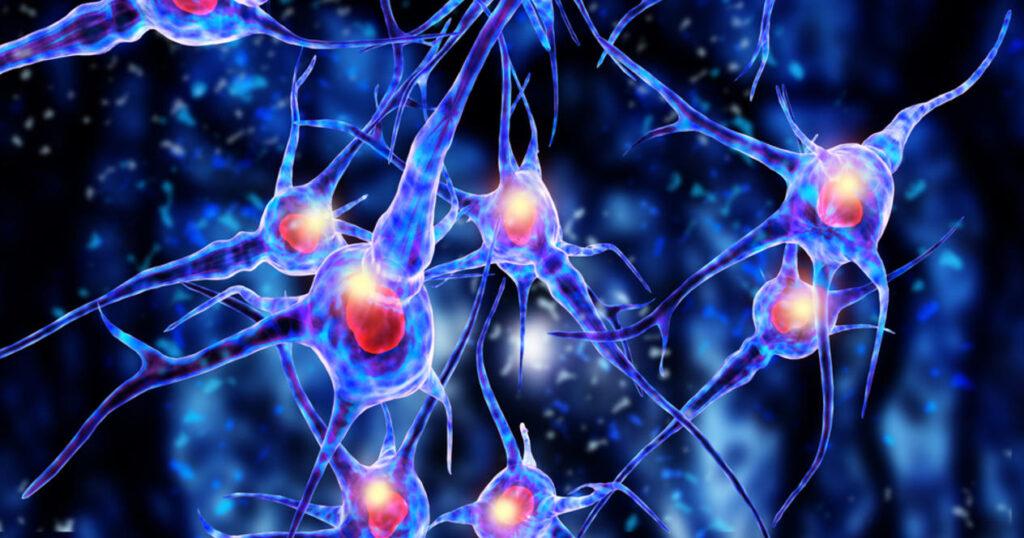 Улучшает функции нервных клеток