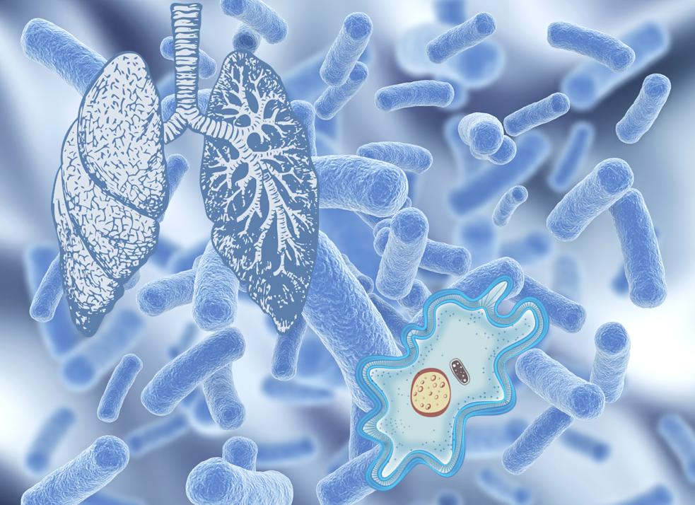 Уколы цефтриаксона уничтожают разных возбудителей инфекции