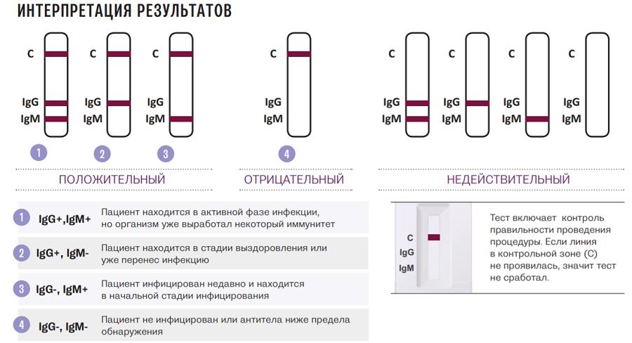 Сроки выделения иммуноглобулинов